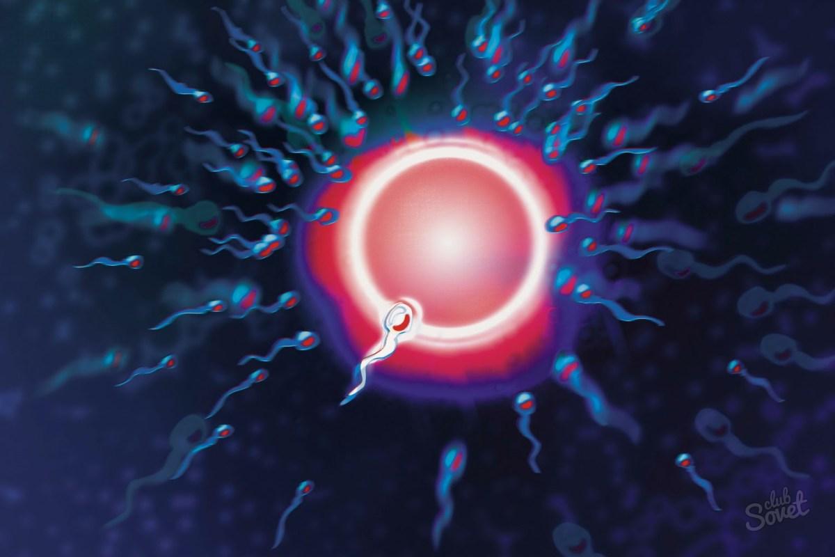 Сколько сперма находится в организме видели
