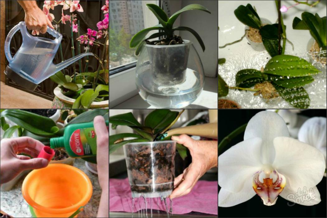 Опыт выращивания орхидей 33