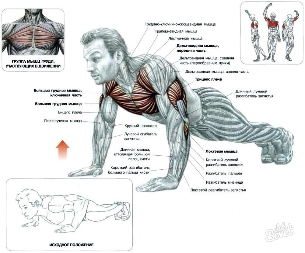 Как накачать все мышцы тела в домашних условиях за месяц