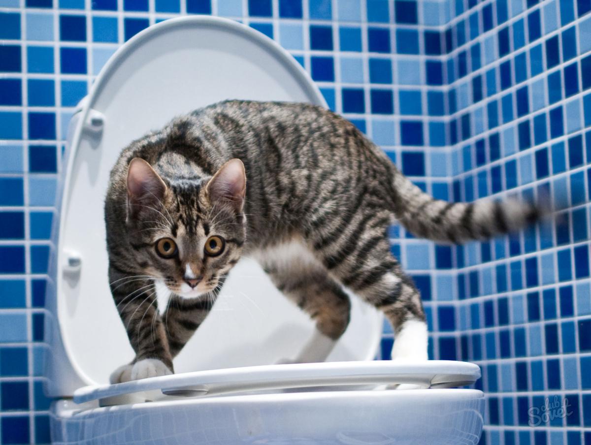 Когда котята самостоятельно ходят в туалет