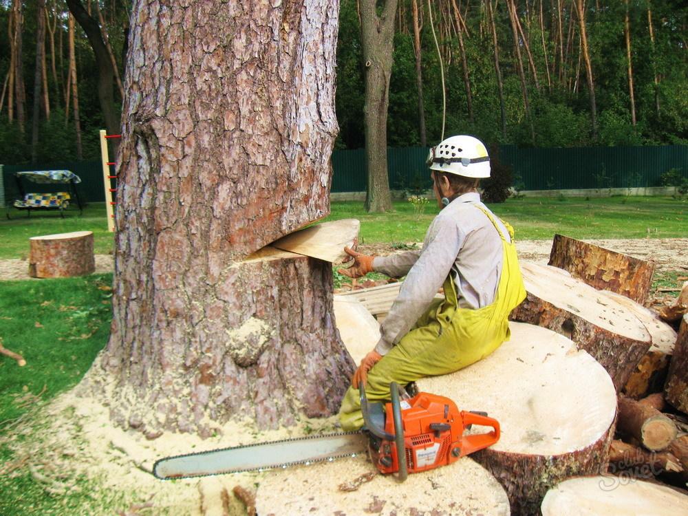 Как правильно сушить спиленные садовые деревья для поделок