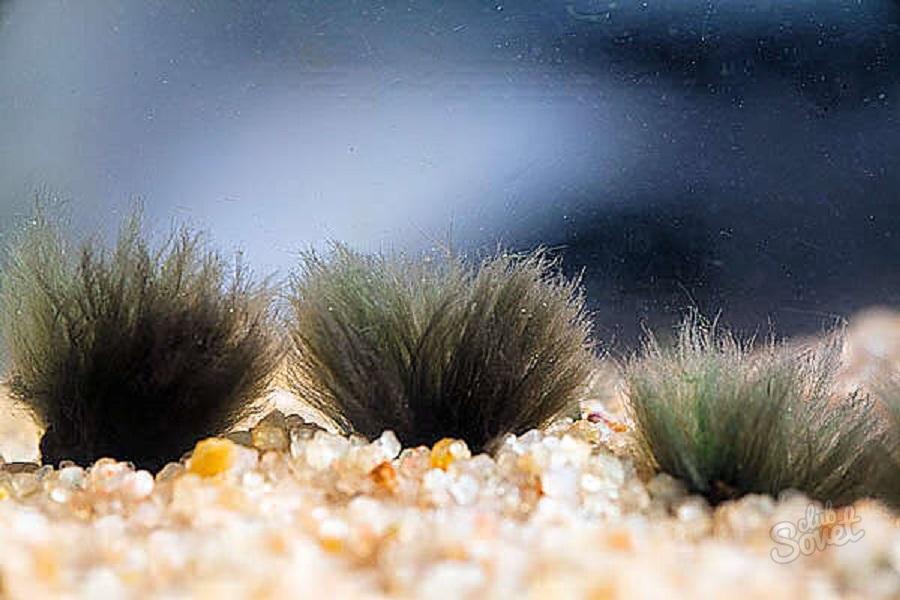 Заселяем аквариум яванским мхом Яванский мох в аквариуме