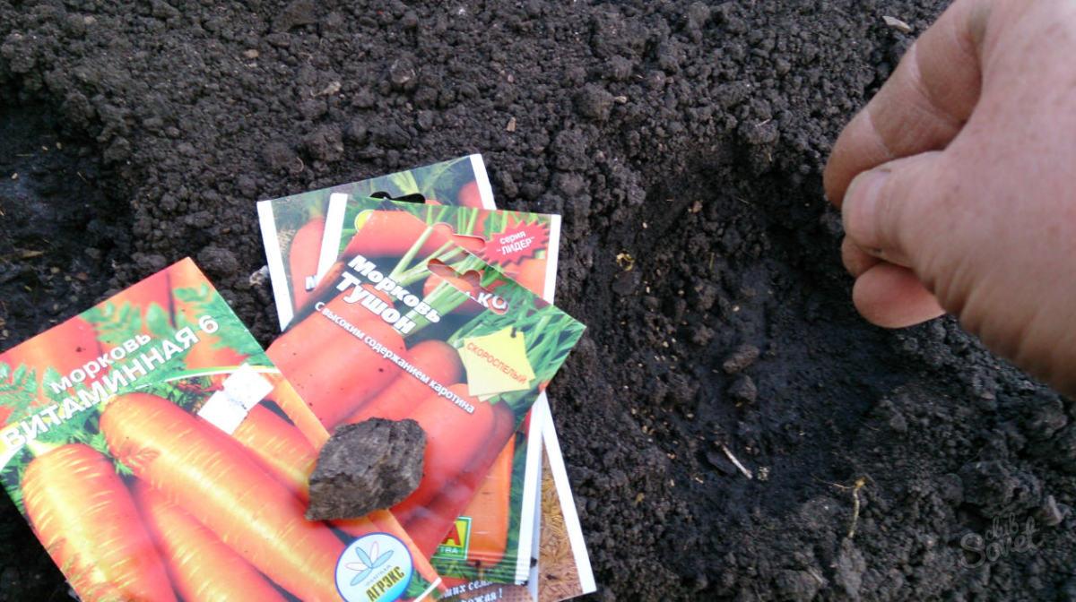 Как правильно сажать морковь 67