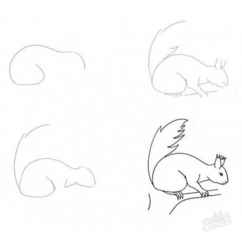 Картинки белочки как нарисовать