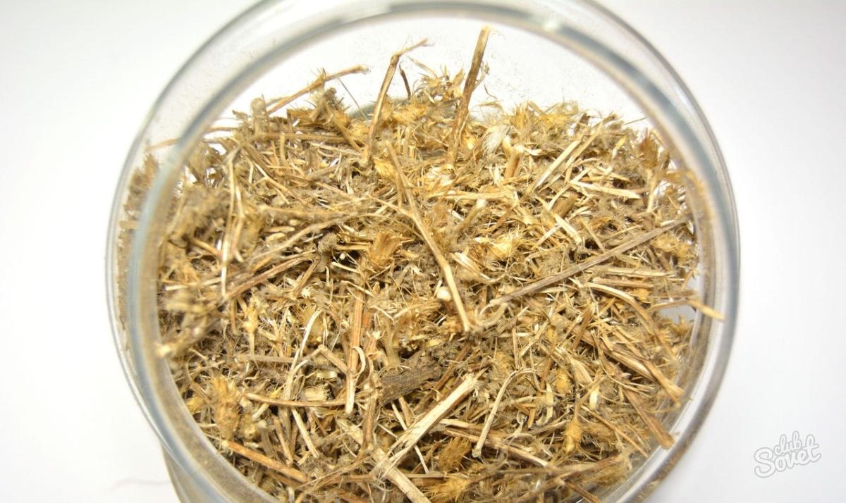 Трава солянка холмовая – применение