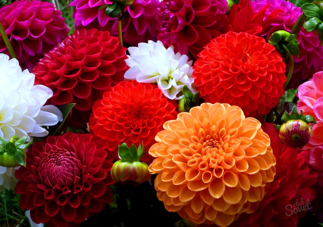 фото всех видов цветков говорят, когда хотят