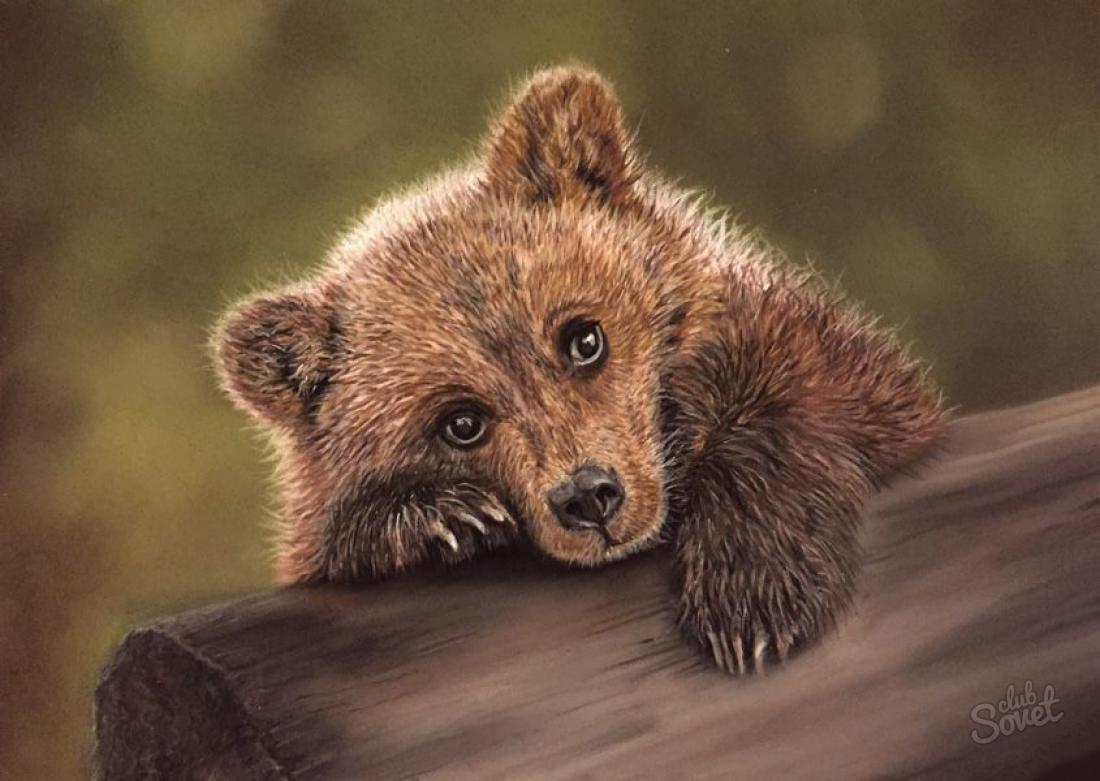 К чему снится медведь во сне