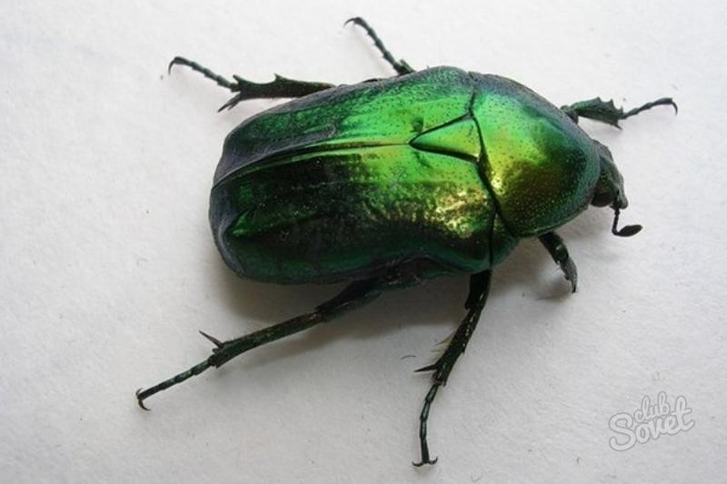 сонник жуки в квартире