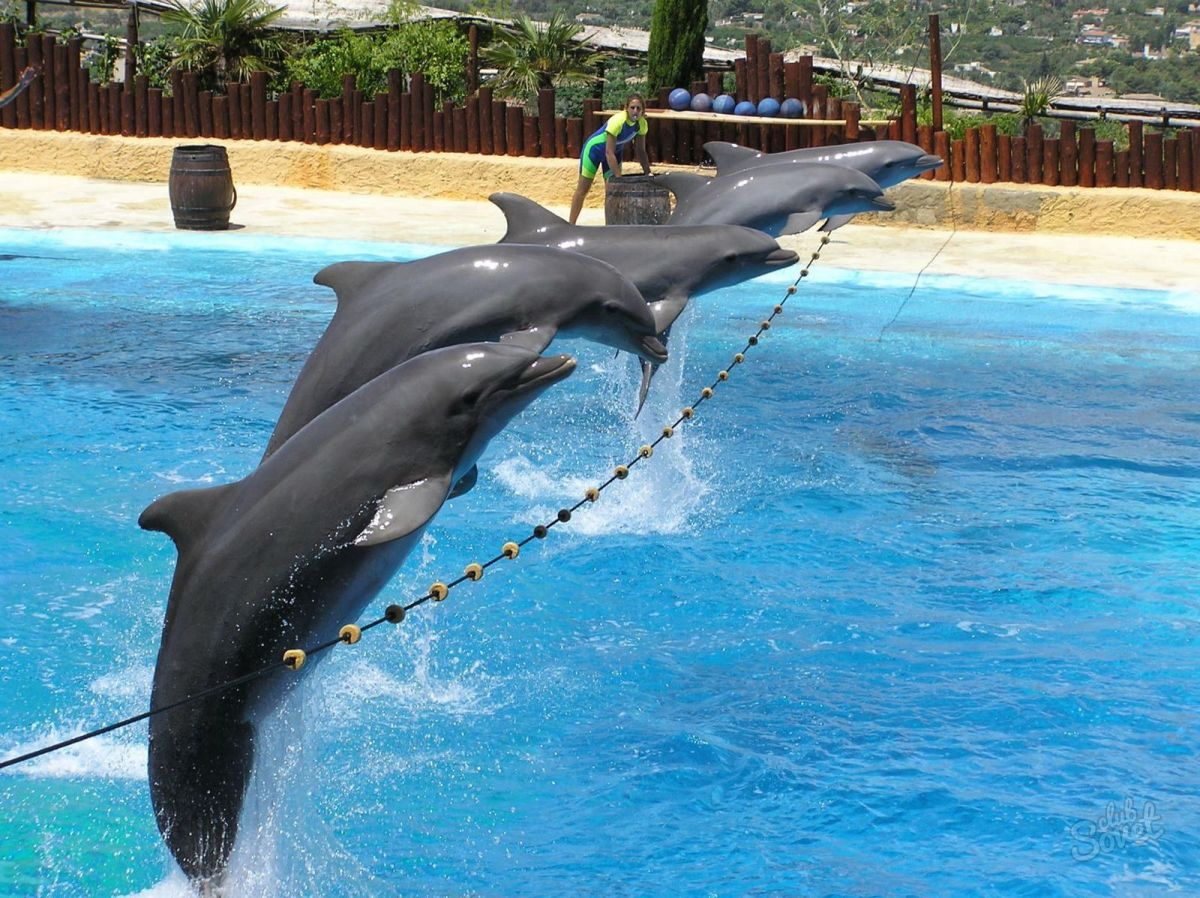 К чему снятся дельфины - сонник