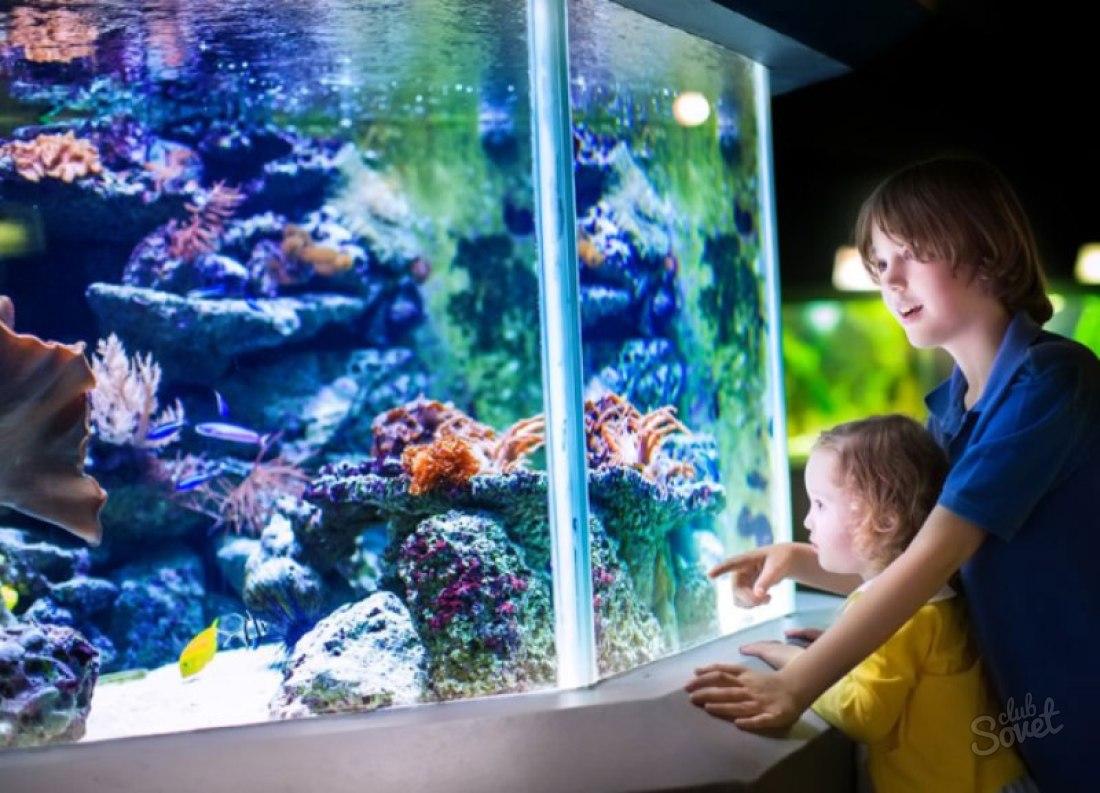Смотреть К чему снятся аквариумные рыбки: толкование значения сна по различным сонникам для мужчин и женщин видео