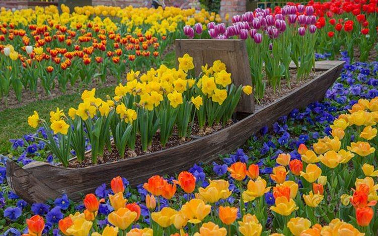 как красиво посадить тюльпаны на участке фото бронза придает