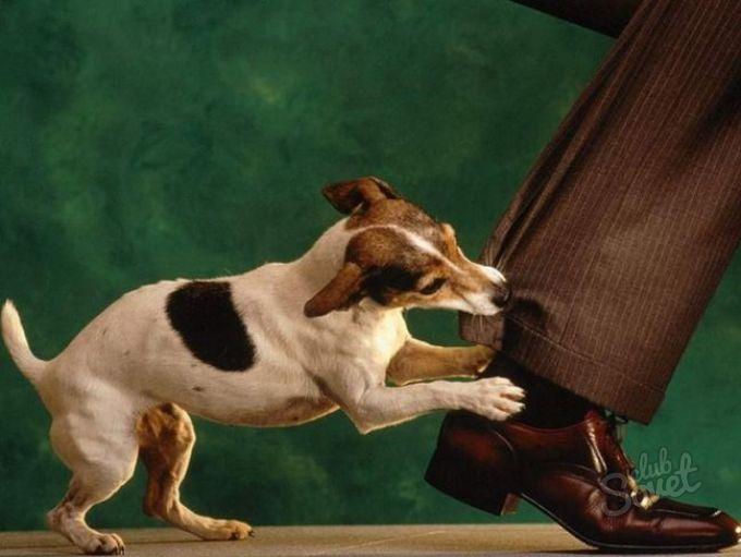 Сонник укусила собака за ногу во сне